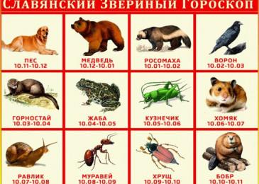 Знаки зодиака по славянскому календарю по месяцам 2020 год