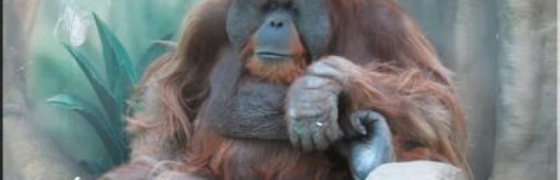 Сценарий на год обезьяны 2016 каким он должен быть