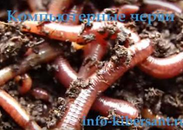 Компьютерные черви что это такое