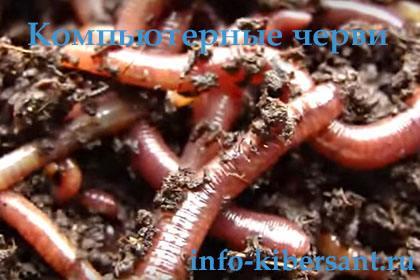 компьютерные черви